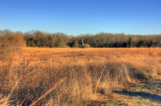fields with tree at weldon springs state natural area missouri