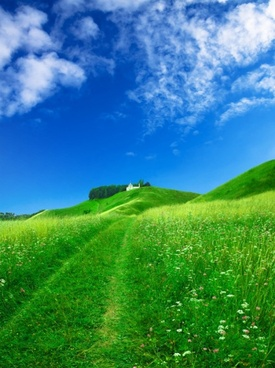 fine grass blue sky hd picture