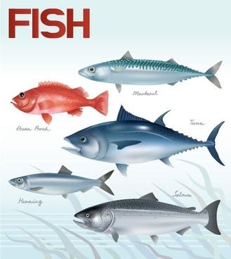 fish 01 vector