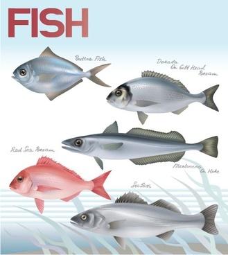 fish 03 vector
