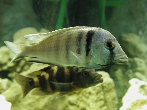 fish aquarium underwater