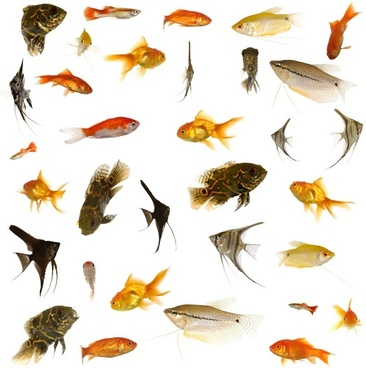 fish collection of highdefinition picture