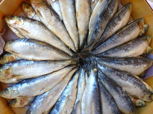 fish eat food