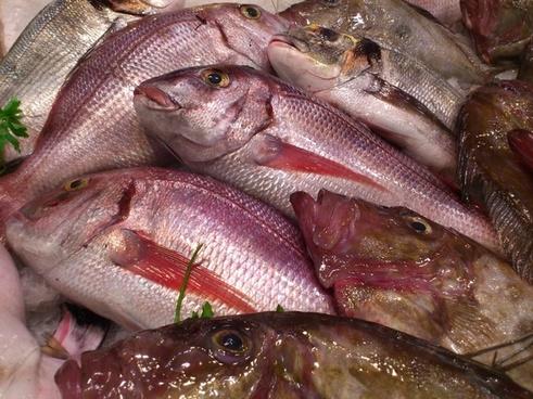 fish fish market food
