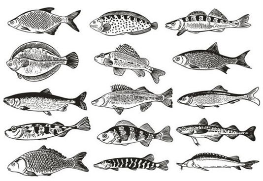 fish species icons collection black white flat design