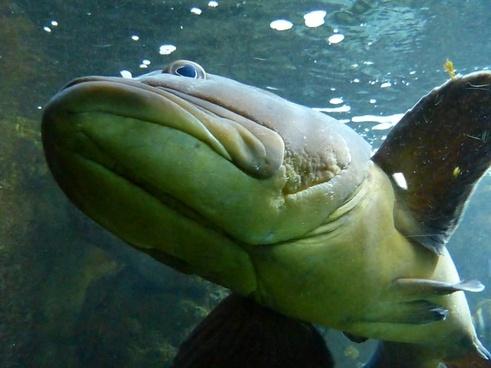 fish perch animal