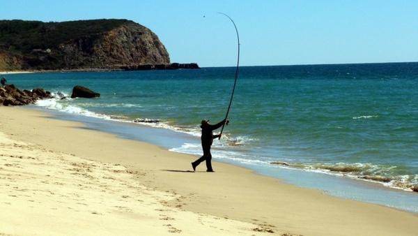 fish sea catch fish