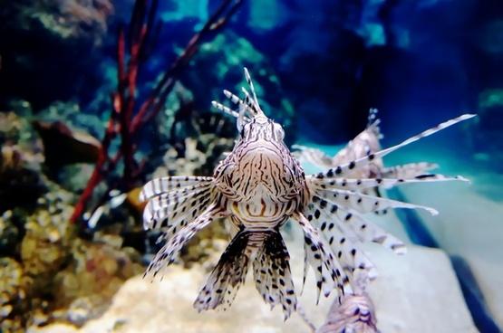 fish underwater exotic