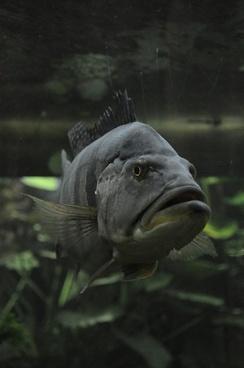 fish water aquarium