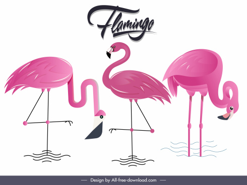 flamingo species background colored flat sketch