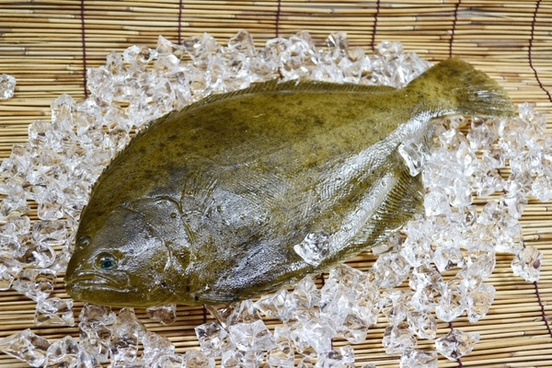 flatfish lefteyed flounder