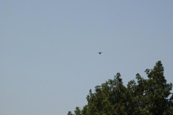 flight of a bumblebee