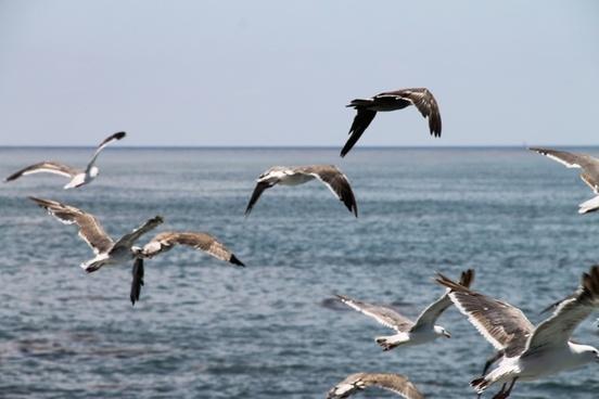 flock of seagulls flying over ocean