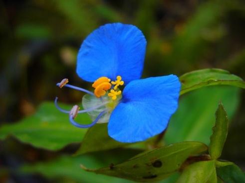 flor blue nature