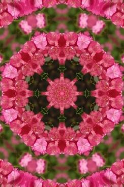floral mandala 2