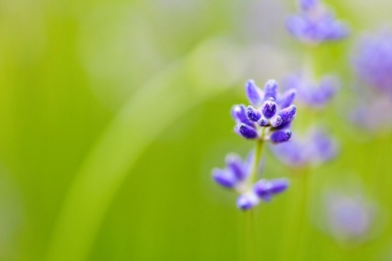 flower and shallow depth of field
