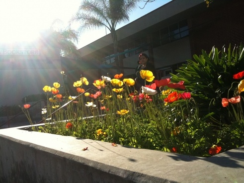 flower bed in sun rays
