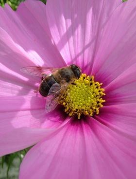 flower bee autumn