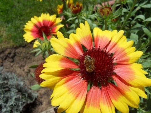 flower bee summer flowers