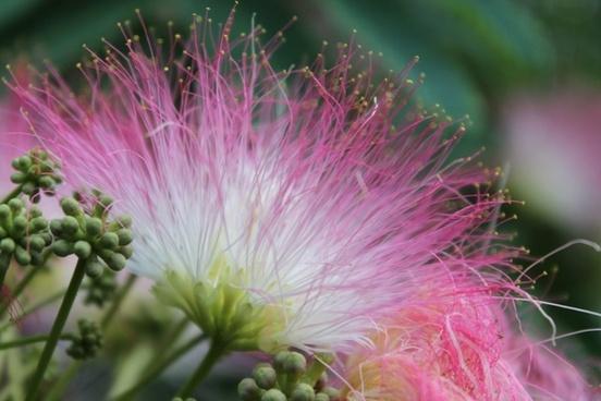 flower bloom nature