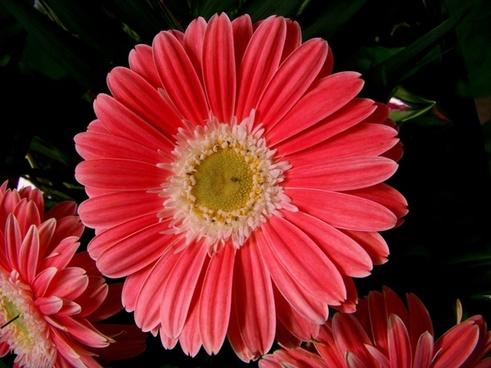 flower bloom spring flower