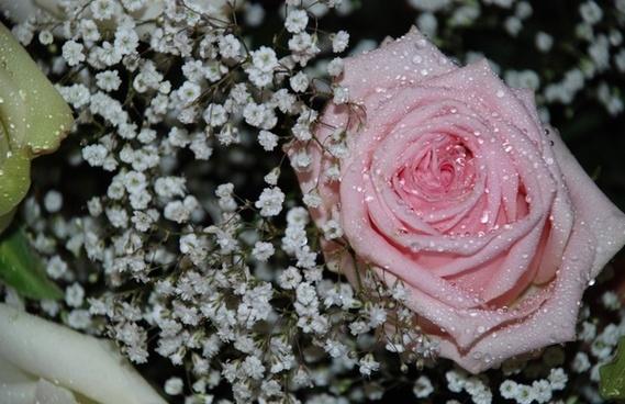 flower bouquet leaf