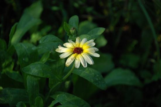 flower bouquet white