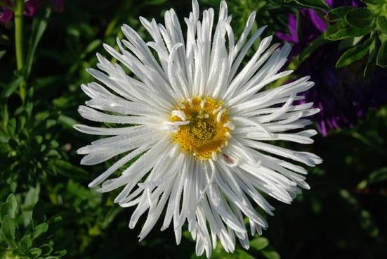 flower bouquet white  leaf nature