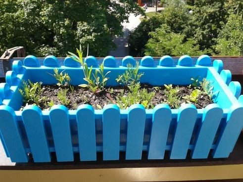 flower box plant blue