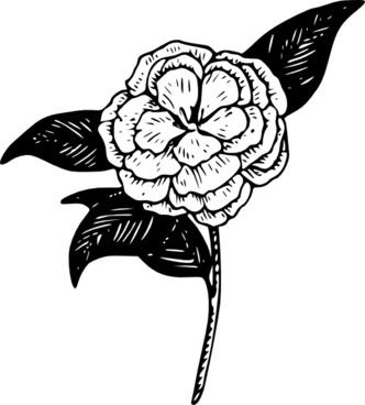 Flower Camellia clip art