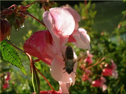 flower close bee