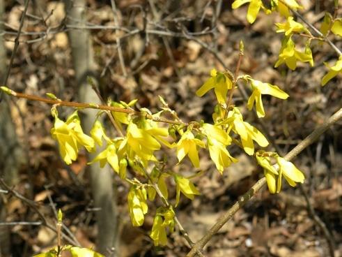 flower close-up macro