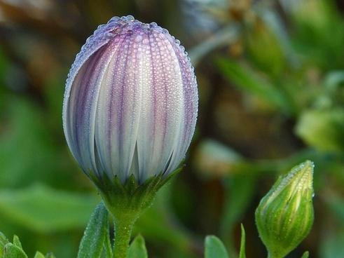 flower dew wet