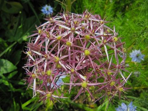 flower flora plant