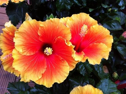 flower flowers botany