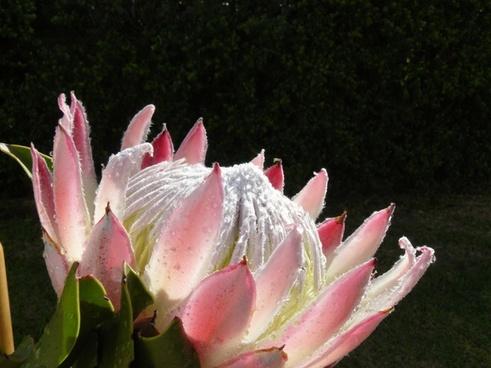 flower flowers giant