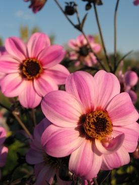 flower flowers summer flowers