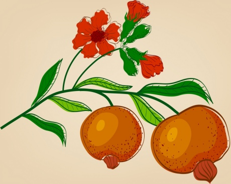 flower fruit drawing pomegranate icon colored handdrawn sketch