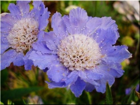 flower garden blue summer