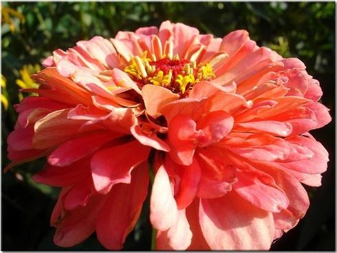 flower garden orange