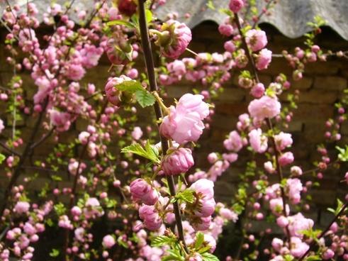 flower garden spring
