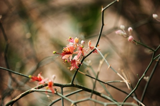 flower indian flower rajasthani flower