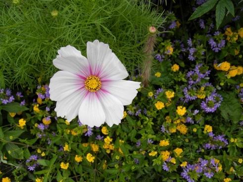 flower macro flowers