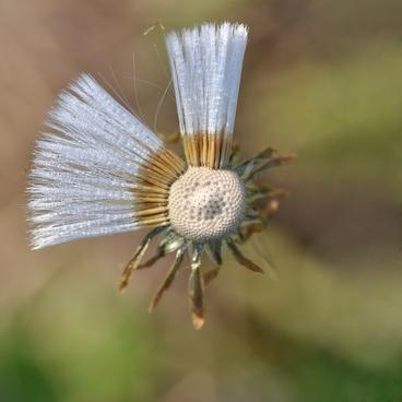 flower macro nature