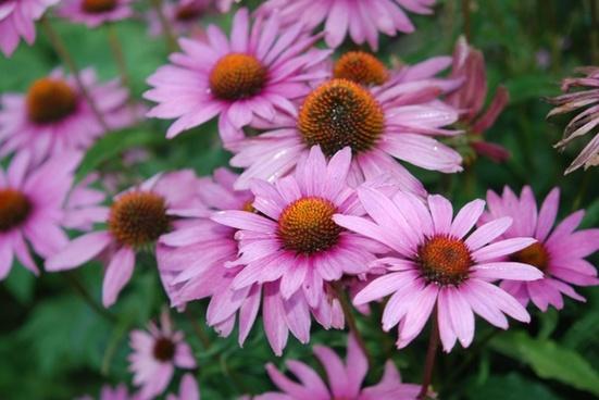 flower natur macro