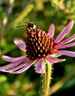 flower nature bee