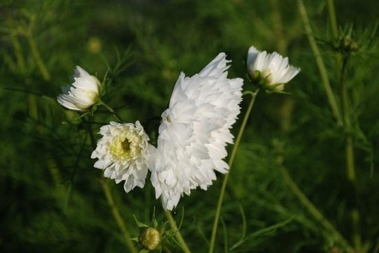flower nature green
