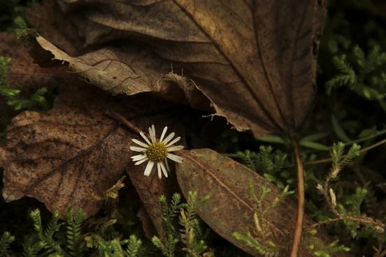 flower nature sheet