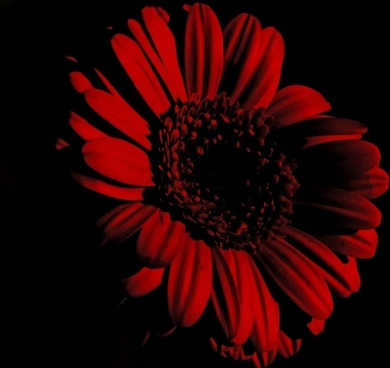 flower on the black background