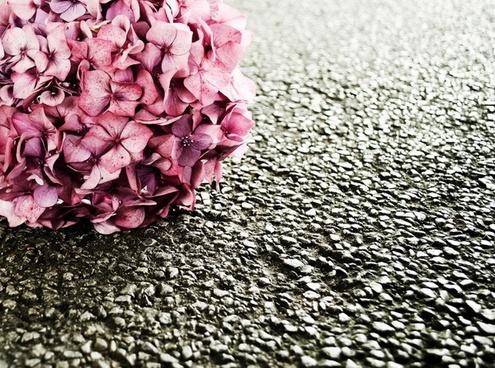 flower on the floor